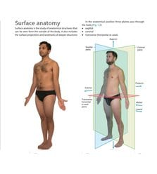 Gray's Surface Anatomy and Ultrasound