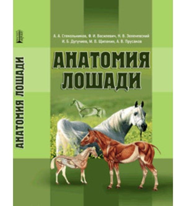 Анатомия лошади