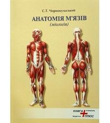 Анатомія м'язів