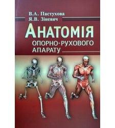 Анатомія опорно-рухового апарату