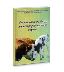 От здорового теленка до высокопродуктивной коровы