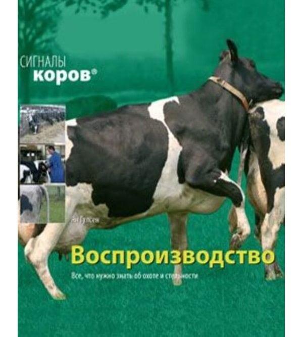 Сигналы коров. Воспроизводство